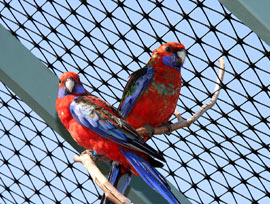 Hayrack Exotic Aviary Birds